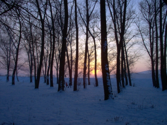iarna18
