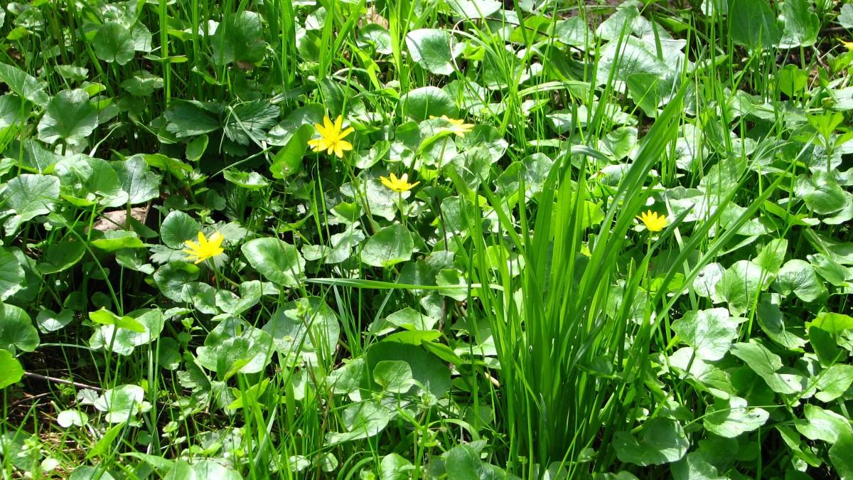 Romanian springtime